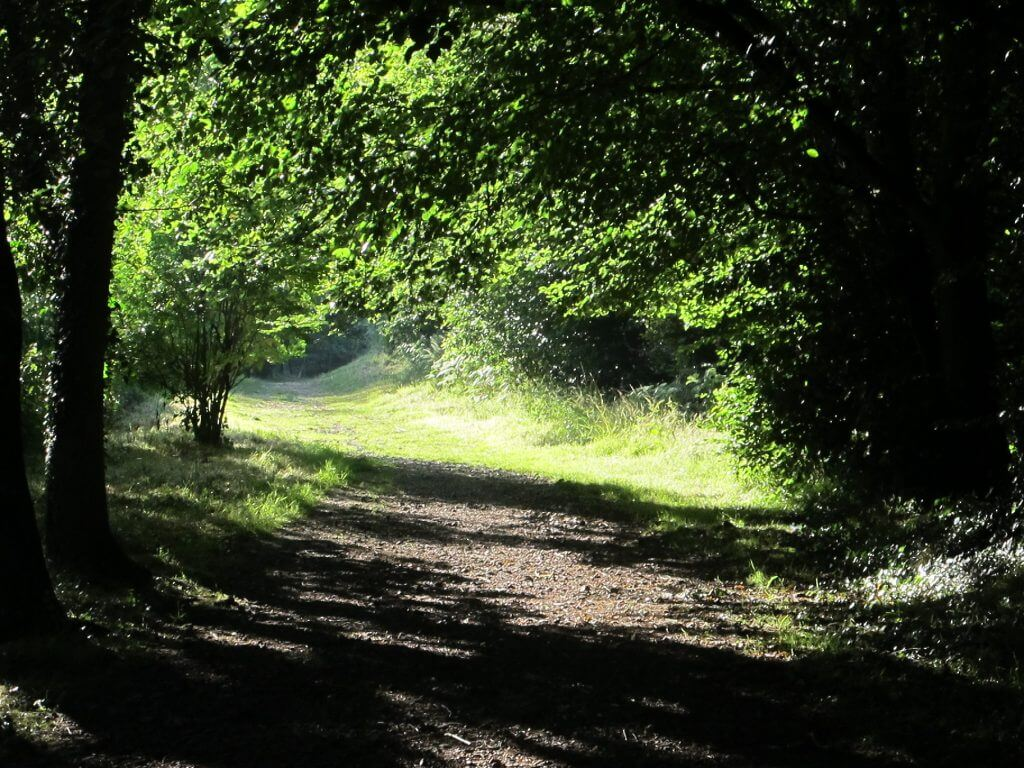Start of the walk through woodland